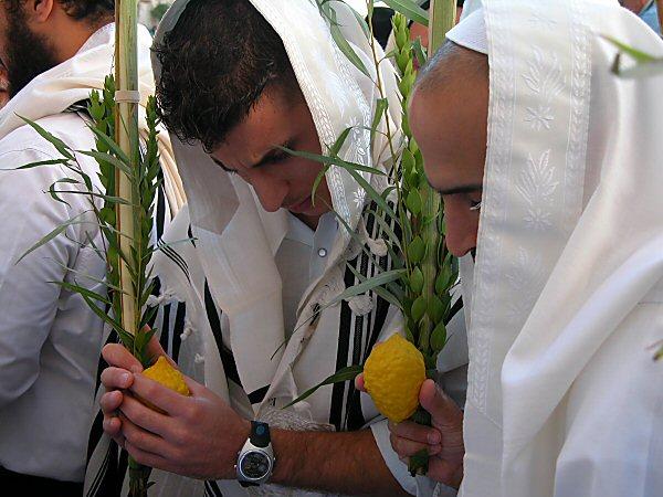 Начинается Суккот - еврейский Праздник Кущей