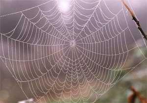 Найдена древнейшая на Земле паутина