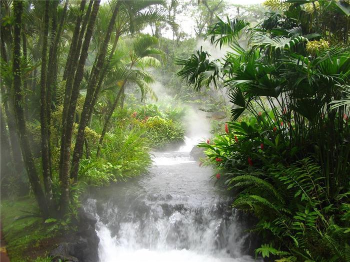 Экологическая проблема лесов тропической зоны