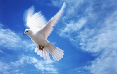 В Крыму запускали голубей - символа Духа Святого