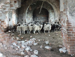 Иллюзия богоборчества. Как раскручиваются «гонения» на Украине