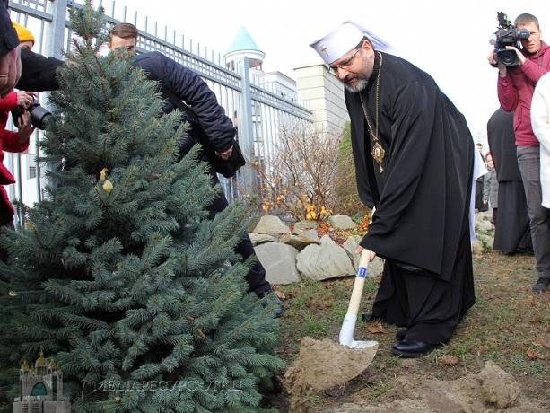 Глава УГКЦ закликає відмовитися від зрубаних живих ялинок на свята