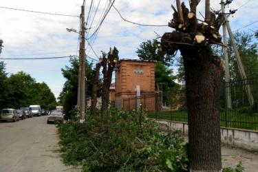 Бюро УГКЦ з питань екології закликає протидіяти надмірному обрізуванню дерев