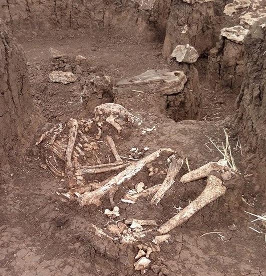Редкая находка — под Мариуполем в кургане нашли останки киммерийца