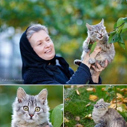Кошки поссорили монахинь и прихожан Флоровского монастыря в Киеве