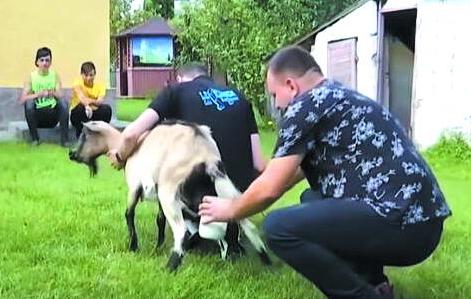 Священник ПЦУ катає на джипі козу для кращих надоїв