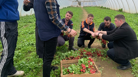 Ужгородські семінаристи збирають урожай редиски